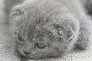 Sad Kitten Royalty Free Stock Photography - Image: 2724847