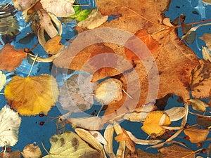 Autumn Leafage Royalty Free Stock Photography - Image: 27208437