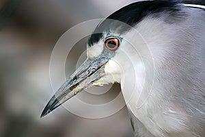Heron Royalty Free Stock Photos - Image: 27268168