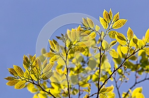 Spring Leaves Stock Photo - Image: 27295640