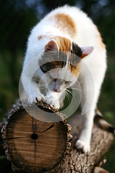 Cat Scratching Royalty Free Stock Photo - Image: 27323895