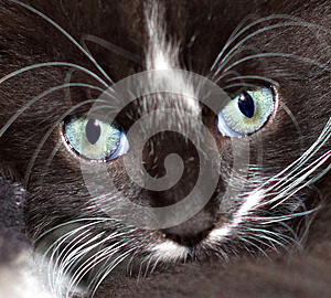 Cat Eyes Royalty Free Stock Photography - Image: 27355577