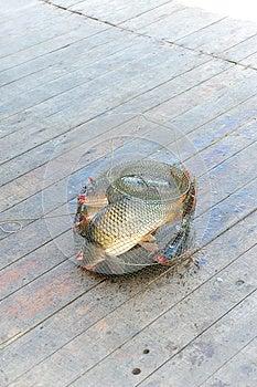 Cattura Dei Pesci Fotografia Stock Libera da Diritti - Immagine: 27435597