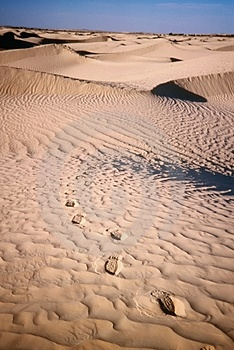 Footprints on desert sand