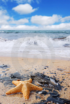 Starfish on Rocks Stock Images