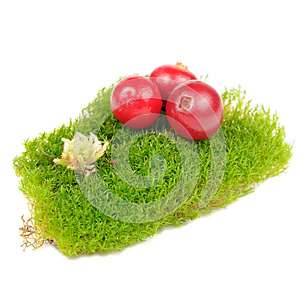 Cranberries On Clump Of Green Moss Royalty Free Stock Photography - Image: 27504807