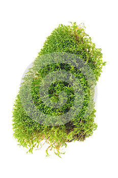 Green Moss Isolated On White Background Stock Image - Image: 27504881