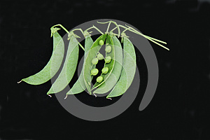 Pea Pods. Stock Photography - Image: 27528572