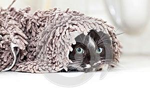 Black-white Kitten Hiding And Peeking Stock Photos - Image: 27595113