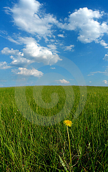Clouds and solitary dandelion Stock Images