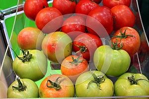 Ντομάτες Στοκ Εικόνες - εικόνα: 27621020