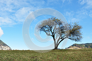 Tree Royalty Free Stock Images - Image: 27661299