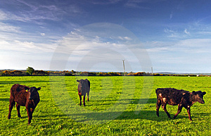 Welsh Countryside Royalty Free Stock Images - Image: 2788789