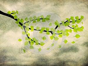 在早午餐的绿色叶子在难看的东西背景 库存图片 - 图片: 27829451