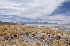 Altiplano Free Stock Images