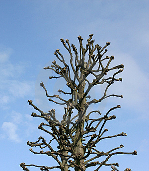 Ugly Tree Royalty Free Stock Photo - Image: 280355