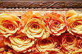 Orange roses 035 Stock Photos