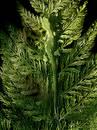 Gecko on fern leaf Free Stock Images