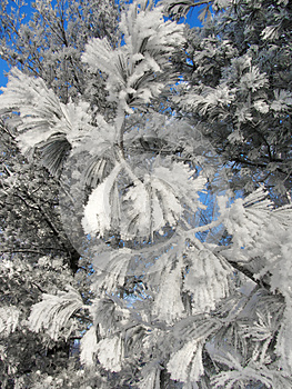 Frozen Winter Branches Royalty Free Stock Photo - Image: 28034045