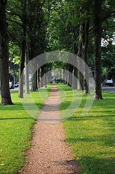 Sidewalk Under The Trees Stock Photo - Image: 28147260