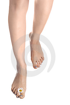 Woman legs go  with ox-eye Royalty Free Stock Photography