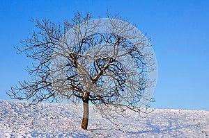 Naked Tree On A Sunny Day Royalty Free Stock Photos - Image: 28218738