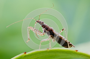 An Assassin Bug Royalty Free Stock Photo - Image: 28227845