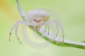 White And Fat Spider Stock Photography - Image: 28228032