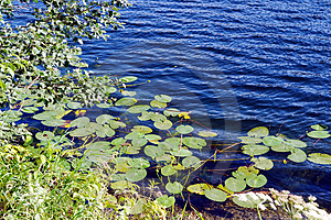 Leafs and Flowers on the Water Royalty Free Stock Photography
