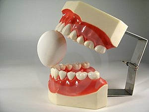 Teeth Model Royalty Free Stock Photos - Image: 2848018