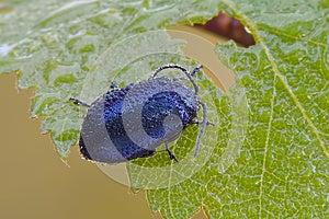 Blue Bug Stock Photography - Image: 28436712