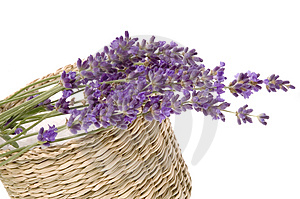 Lavender bath Stock Photo