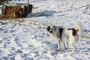 Hund Und Kuh Stockfotografie - Bild: 28508782