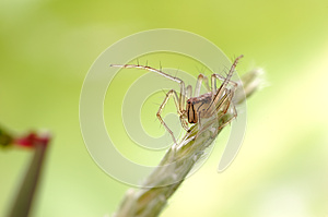 Small Spiders Stock Photo - Image: 28597980