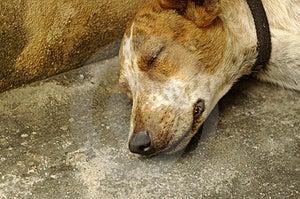 Sad Dog Sleeping Stock Photo - Image: 2863400