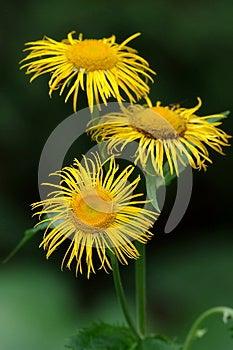 Fiore Selvaggio Fotografia Stock - Immagine: 28623032