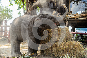 Baby Elephant Royalty Free Stock Photos - Image: 28691958