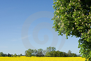 Spring in Europe Royalty Free Stock Photo
