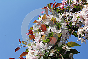 Wreath Rosy Delicate Flower Stock Image - Image: 28779091