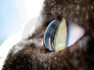 Cat Stock Image - Image: 2880351