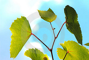 Green Leave Stock Photography - Image: 2890512