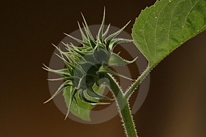 Bad Hair Day Royalty Free Stock Images - Image: 2893489