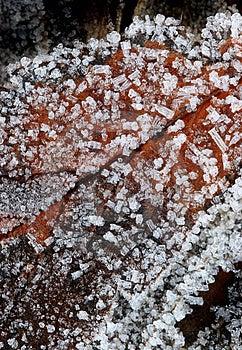 Feuille Congelée (macro) Photos libres de droits - Image: 298338