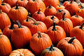 Pumpkins Free Stock Photography