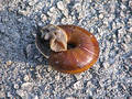 Beautiful snail on the road Royalty Free Stock Photography