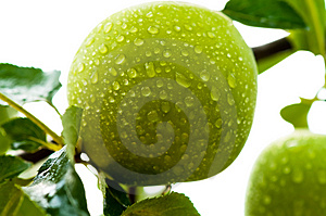 Pomme Verte Photos stock - Image: 2913623