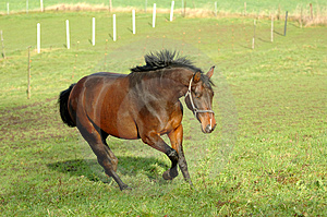 Running horse Free Stock Images