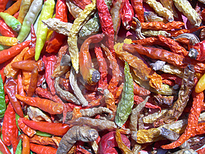 Colourful Chilli Stock Image - Image: 2952111