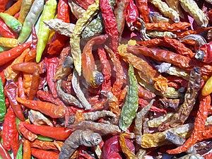 Colourful Chilli Stock Image - Image: 2952111