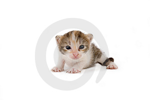 3 Weeks Striped Kitten Royalty Free Stock Photos - Image: 2954188
